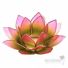 Svícen lotos zelenorůžový