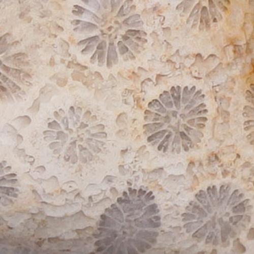 Korál fosilní indonéský detail pro FB
